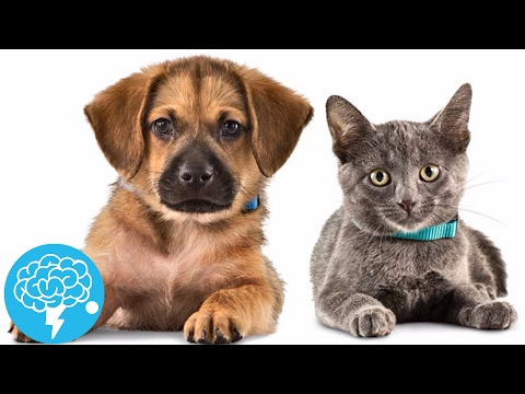 Can a pet cure your anxiety and depression?!