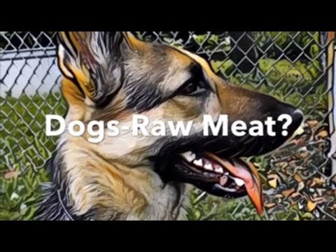 Can you feed raw chicken leg to a dog? asl
