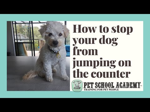 How to stop your dog from jumping on the counter - pet school academy