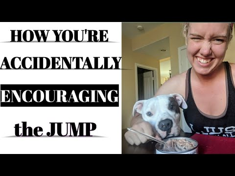 How to stop dog counter surfing// dog behavior science is causing your dog to jump