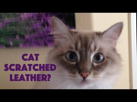 How to repair cat scratches on real leather furniture or upholstery