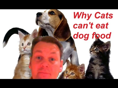 Why cats can't eat dog food 5 reasons