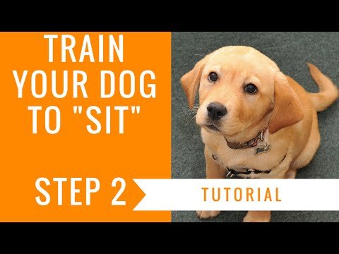 How to train your dog to sit: step 2 tutorial