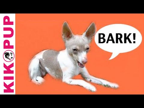How to train your dog not to bark- episode 1 - barking at noises