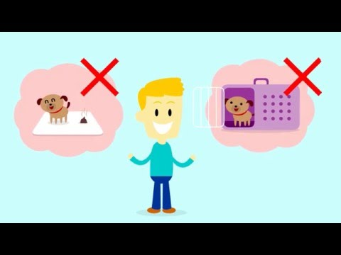 How to potty train a puppy | house train your dog | house training a puppy