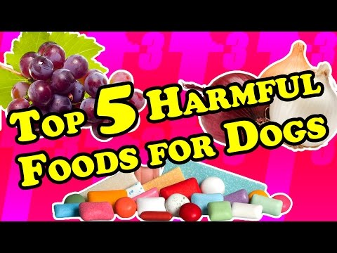 Top 5 foods you didn't know could harm your dog