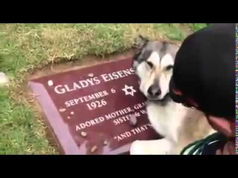 This dogs owner died, very sad reaction