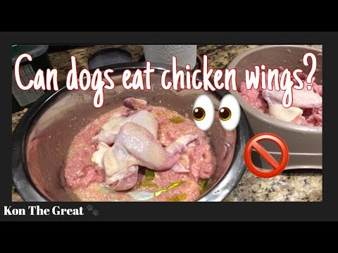 My dogs eating chicken wings! | asmr | are chicken wings good for dogs?