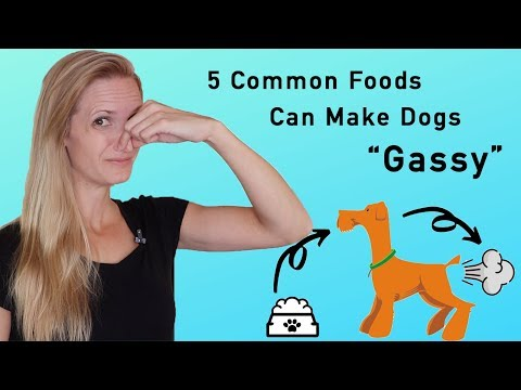 """Sick of stinky dog farts? these 5 common food types can make dogs """"gassy"""""""
