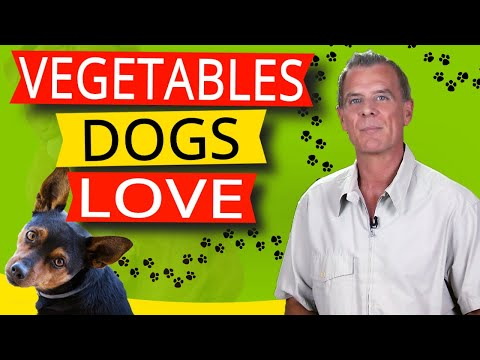 16 vegetables dogs like to eat (and 9 reasons why)