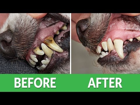 How to fix bad dog breath? | ultimate pet nutrition - dog health tips