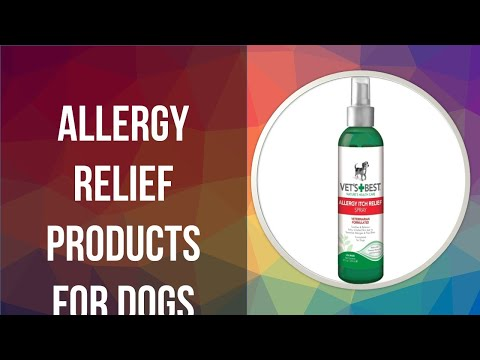 5 allergy relief products for dogs on the market in 2020