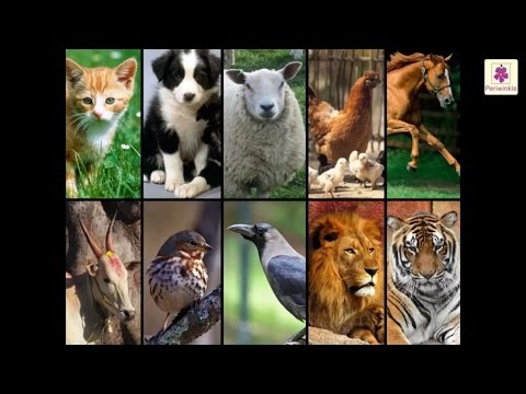 Why animals are important for us? | science for kids | grade 2 | periwinkle
