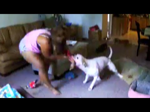 Bulldog turns on woman who rescued him