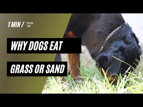 Why dog eat grass or sand | how to stop dog eating sand or grass | 1 min dog tip | #shorts #crshorts