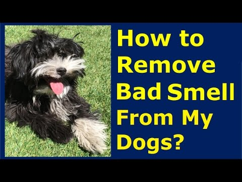 How to remove bad smell from my dog?   healthy clean pet