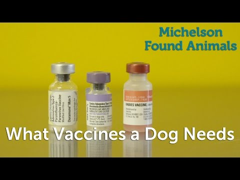 What vaccines a dog needs