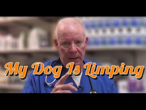 Dog limping - my dog is limping - ask the expert | dr david randall