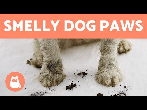 My dog's paws smell bad 🐾🐕 (why and what to do)