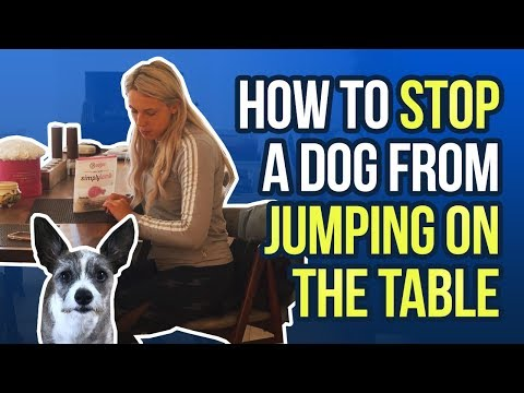 How to stop a dog from jumping on the table