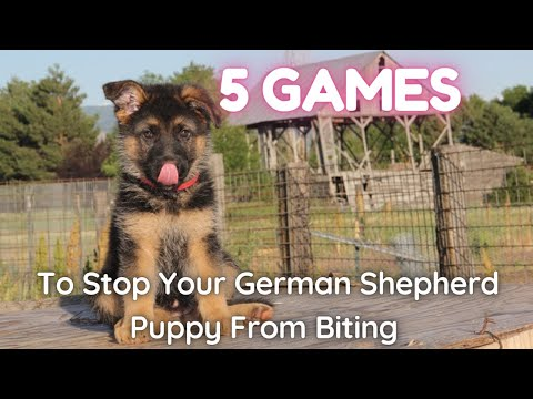5 games to stop your german shepherd puppy from biting