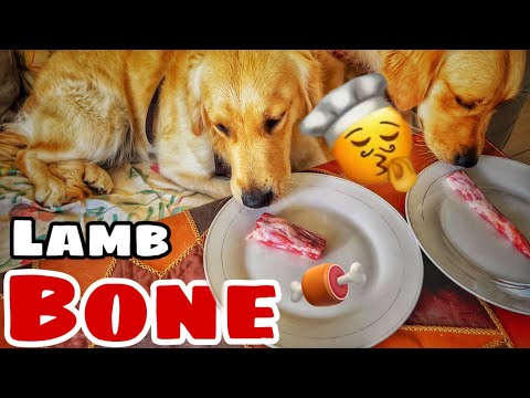 This is what happens when you feed raw bones to dogs