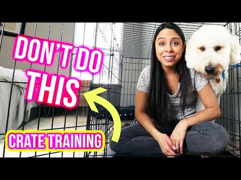 Crate training tips: what not to do // how to crate train a puppy