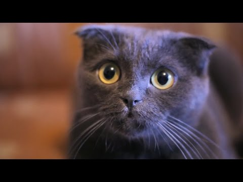 5 reasons cats make better pets than dogs