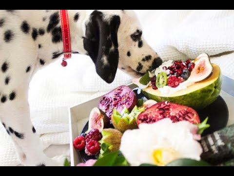 Foods that can easily kill your dog don't give these foods to your dog