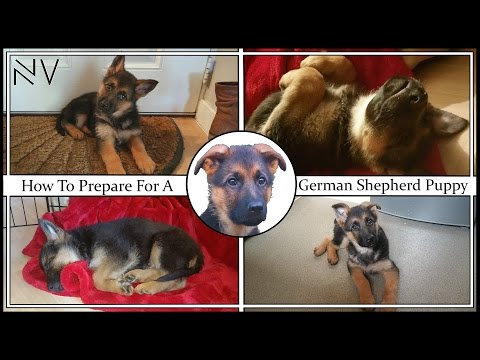 How to prepare for a german shepherd puppy