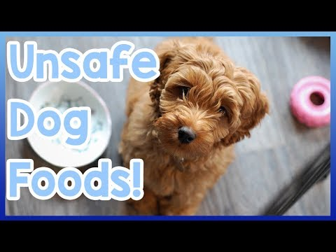 Things dogs can't eat! most toxic foods for dogs!