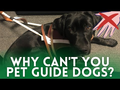 The real reason you can't pet guide dogs and service dogs