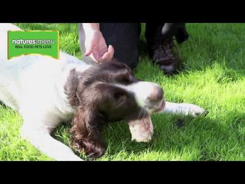 Are raw bones safe for dogs to eat?