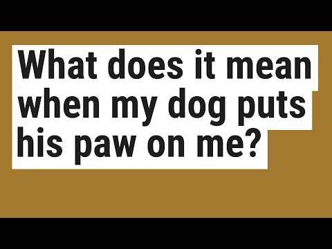 What does it mean when my dog puts his paw on me?