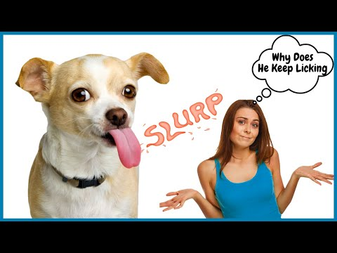 Why does my dog lick me all the time? my dog licks everything and everyone | it's embarrassing!!!
