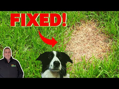 How to treat dog urine spots on grass | before and after