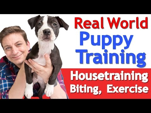 Puppy training 101: this is what a typical day should look like