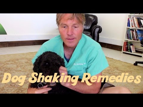 How to treat dog shaking naturally