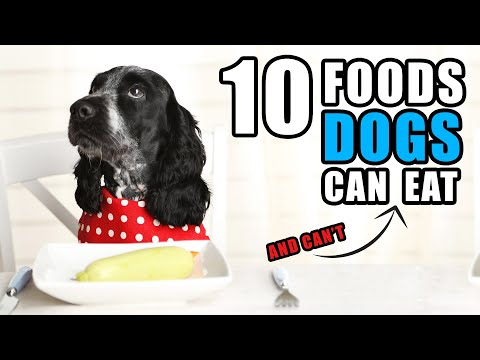 Foods your dog can & can't eat | talkin' dogs list show