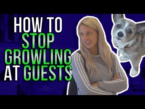 How to stop growling at guests