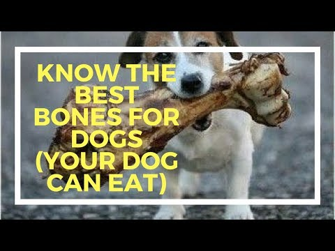 Know the best bones for dogs (your dog can eat)