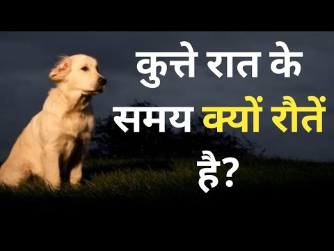 Why dogs crying at night? why dogs cry? all in one