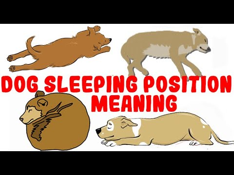 What your dog's sleeping position reveals about their personality, health and character