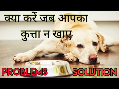 Why is my dog not eating food : reasons & solution || dog not eating food || pets plaza