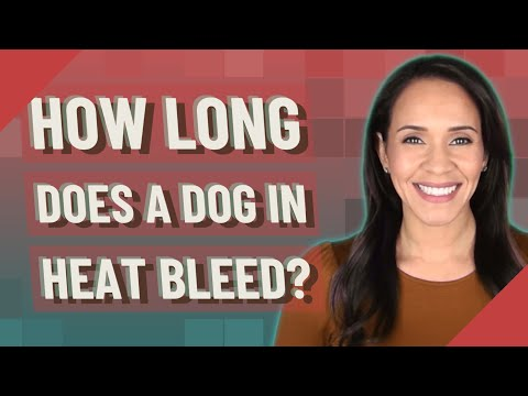 How long does a dog in heat bleed?
