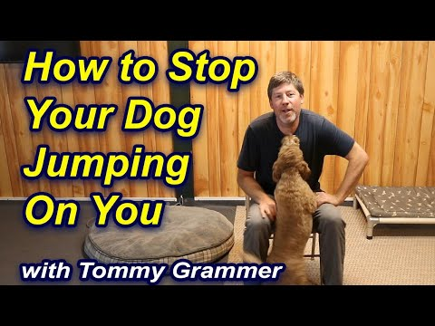 Stop your dog jumping up on you