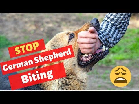 How to stop german shepherd puppy from biting? gsd puppy mouthing and nipping tips