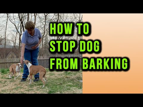 How to stop dog from barking at everything outside