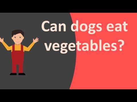 Can dogs eat vegetables ?