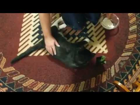 Diatomaceous earth getting rid of fleas on pets